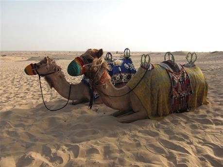 BAS_camel_activety.jpg