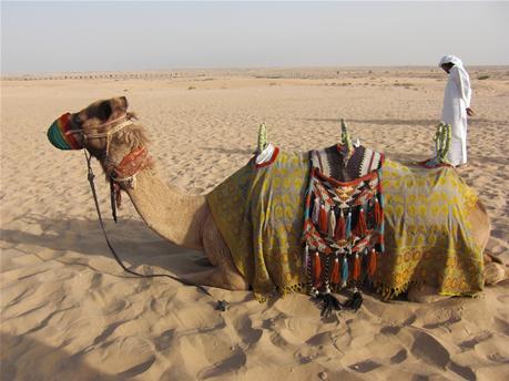 BAS_camel_activity2.jpg