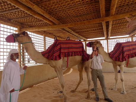 camel3.jpg